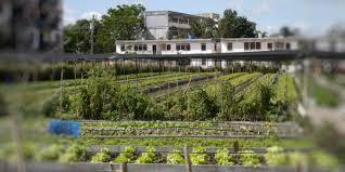 The Urban Garden Vancouver Urban Agriculture U2014 The Urban Farmer