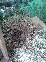 the leaf compost experiment urine vs compost vs fertilizer vs