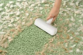 gerüche entfernen katzenurin aus dem teppich entfernen teppich reinigen