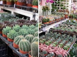 How To Care For Your by How To Care For Your Succulents A Pair U0026 A Spare