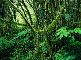 native plants of costa rica remote and exceptionally pristine it spans cloud forest terrain