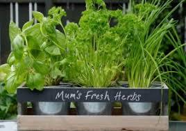 indoor herb garden kits to grow herbs indoors hgtv indoor windowsill herb garden kit gorgeous growing herbs indoors