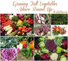 Fall Vegetable Garden Ideas 457 Best Garden Cold Climate Gardening Images On Pinterest
