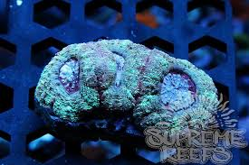 thanksgiving reefs thanksgiving black friday sale reef2reef saltwater and reef