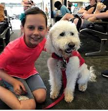 Washington traveling with pets images Lax 39 s therapy dogs help stressed passengers one pet at a time JPG