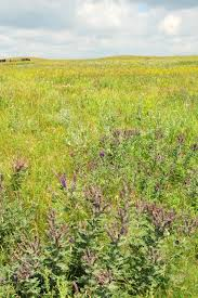 native prairie plants illinois home prairies research guide libguides at university of