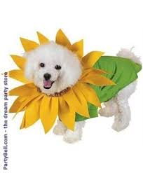 Spirit Halloween Pet Costumes 36 Pet Costumes Images Animals Pet Costumes