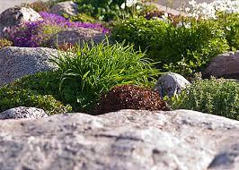 Decorative Rocks For Garden Creating A Rock Garden Design 20 Fascinating Ideas