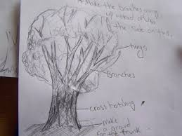 how to draw trees find the inner artist in you