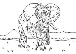 elephant colouring sheet animals thecolouringbook org