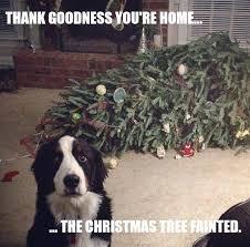 Funny Memes About Christmas - funny meme dog christmas tree fainted