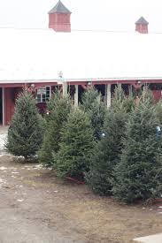 roba family farms christmas trees