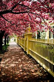 best 25 blossom trees ideas on pinterest pink trees cherry