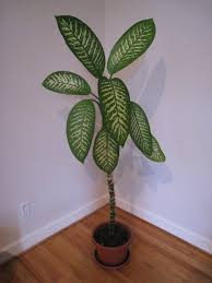 List Of Tropical Plants Names - 10 common but deadly plants common plants deadly plants oddee