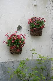7 best shade hanging baskets images on pinterest coral bells