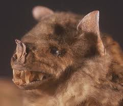 natural history collections what do bats look like