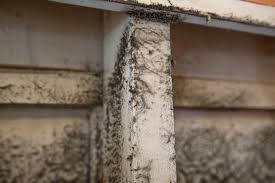 How To Clean Mold In Bathroom How To Rid Your A C Of Mold And More Angie U0027s List