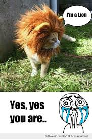 Yes Yes Yes Meme - i m a lion cat meme cat planet cat planet