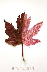 mirror leaf drawings nature art the imagination tree
