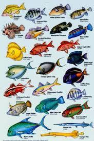aquarium fish images with names pictures of aquariums with fish
