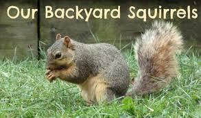 Backyard Products Monroe Mi Squirrels In Our Michigan Backyard U2013 When Life Is Good
