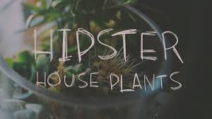 hipster house plants youtube