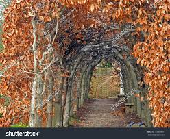 archway woven branches amber leaves defines stock photo 123304894