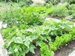when to plant vegetable garden gardening ideas