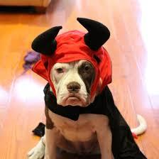 Puppy Halloween Costumes Pet Halloween Costumes Popsugar Pets