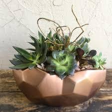 Succulent Plant Urban Jungle U2013 We Dig Plants