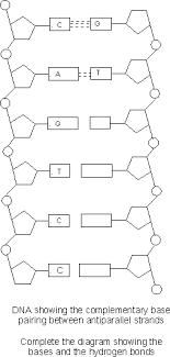Dna Structure And Replication Worksheet Key Master Frameset