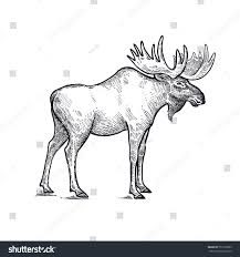 forest animal moose hand drawing sketch stock vector 553162393