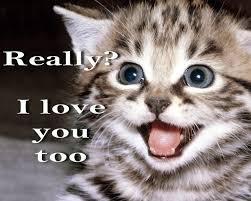 Cute I Love You Meme - really cat meme cat planet cat planet cute i love you animal
