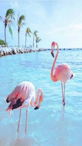 wallpaper with pink flamingos wat schattig die flamingo s wallpaper pinterest flamingo