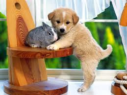 dog wallpapers cute puppy dog wallpapers download