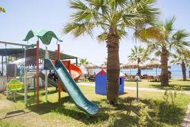 outdoors palm tree seed palm tree playground pre lit palm tree