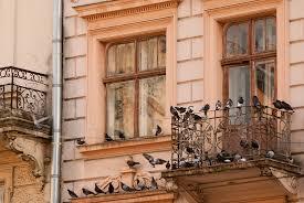 taubenabwehr balkon tauben vertreiben 7 tipps haushaltstipps net
