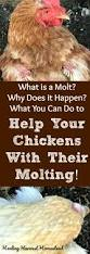 1497 best chicken coop images on pinterest raising chickens