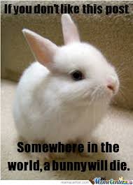 Funny Rabbit Memes - cute bunny by hypershot12 meme center
