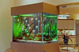 astounding fish tank in living room with wood wall design