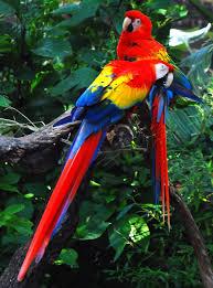 most beautiful parrots explore amazing world birds pinterest