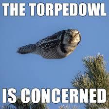 Owl Memes - torpedo owl meme on imgur