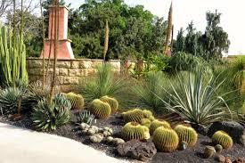 the best types of cactus to grow in your garden