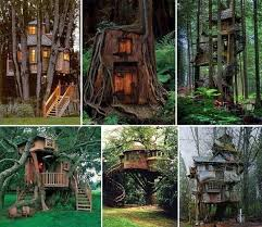 Cool Tree Houses 35 Best Cool Tree Houses Images On Pinterest Treehouses