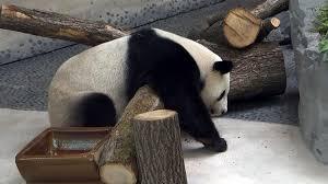 staatsakt mit pandas zdfmediathek