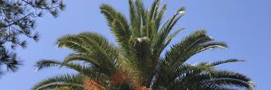 pro trees contact us