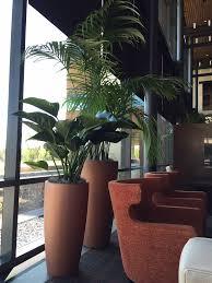 lexus flowers houston texas portfolio test plant interscapes indoor office plants
