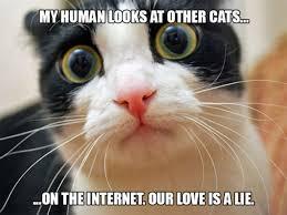 Sad Cat Memes - 18 hilarious sad cat problems that might explain why your cat s so
