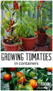 7465 best gardening u0026 outdoors images on pinterest organic