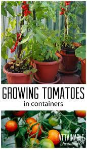 7250 best garden love images on pinterest gardening tips